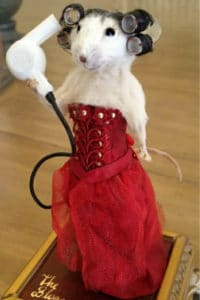 The Bloggess as a Taxidermy Mouse